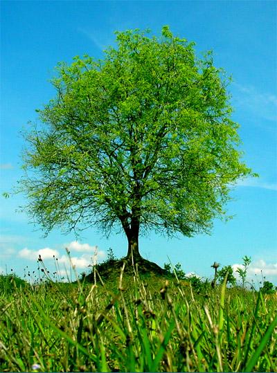 tree1536.jpg