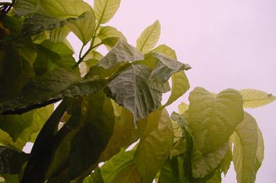 rain00.jpg