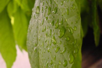 rain02.jpg